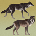 Concept Art - Legacy 06: Various Wolves