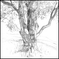 Sketches - Tree